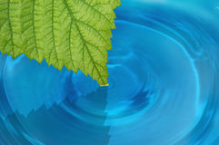 Green leaf in the water Stock Photography