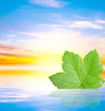 Green leaf in water on blue sunny background. For design Stock Image