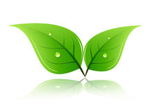Green leaf with water bu-bless Stock Photo