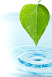 Green leaf and water Stock Photos