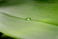 Green leaf with water drop Stock Images
