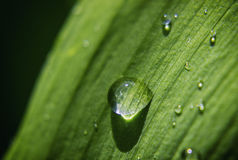 Green Leaf Water Drop Stock Images