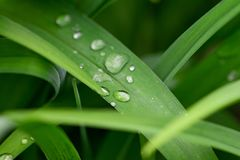 Green leaf with water drop for background texture.  stock image