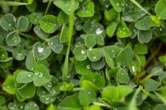 Green leaf with water drop for background texture.  stock photos