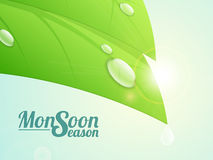 Green leaf and water drop for Monsoon. Royalty Free Stock Photos