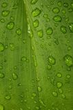 Green Leaf With Water Drop Texture Royalty Free Stock Photography