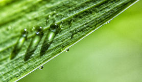 Green Leaf Water Drop Royalty Free Stock Photo