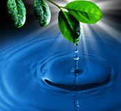 Green leaf with water drop water on blue  backgrou Royalty Free Stock Photo