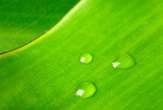 Green leaf with water droplet Stock Photo