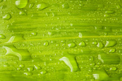 Green leaf and water droplets Stock Image