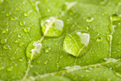 Green leaf with water droplets Royalty Free Stock Photography