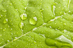 Green leaf with water droplets Stock Image