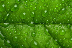 Green leaf with water droplets Stock Photos