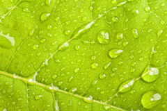Green leaf with water droplets Stock Photo