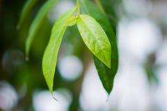 Green leaf Stock Image