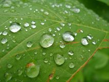 Leaf with droplets. Green leaf with water droplets Royalty Free Stock Photo