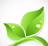 Green leaf with water droplets. Vector Stock Image