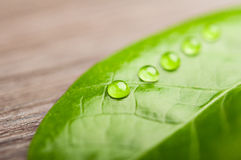 Green leaf. water drops. Green leaf and water drops Royalty Free Stock Image