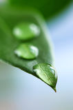 Green leaf with water drops. Macro of a green leaf with water drops Stock Photo