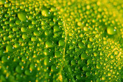 Green leaf with water drops Stock Photography