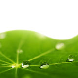 Green leaf with water drops. On it (shallow DoF Stock Photography