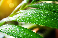 Green leaf with  water drops Royalty Free Stock Photo