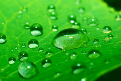 Green leaf with water drops. On it Stock Photos