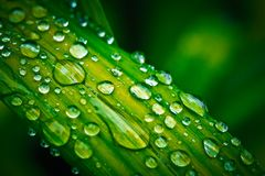 Green leaf with water drops Royalty Free Stock Images