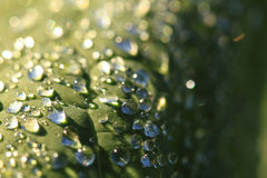 Green leaf and water drops Stock Photos
