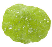 Green Leaf Water Drops Background Stock Image