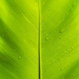 Green leaf with water drops Stock Photos