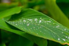 Green leaf with water drops close up.  Stock Image