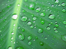 Green leaf with water drops Stock Images