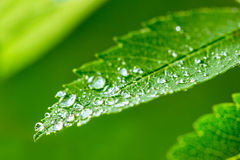 Green leaf and water drops detail Royalty Free Stock Photo