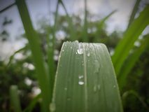 Green leaf with water drops. stock image