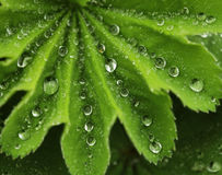 Green leaf with water drops. Macro Royalty Free Stock Photos