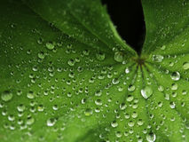 Green leaf with water drops. Macro, close up Royalty Free Stock Photography