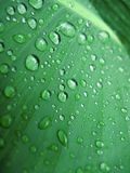 Green leaf with water drops Royalty Free Stock Photography