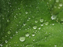 Green leaf with water drops. Macro, summer day Royalty Free Stock Photos