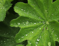 Green leaf with water drops. Macro, summer day Stock Photo