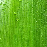 Green leaf with water drops. Natural background texture Stock Image