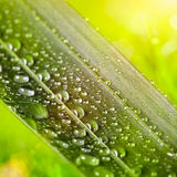 Green leaf with water drops on natural sunny background. The green leaf with water drops on natural sunny background Royalty Free Stock Images