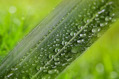 Green leaf with water drops on natural sunny background Royalty Free Stock Images