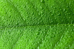 Green leaf with water drops over it Royalty Free Stock Photos