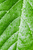 Green leaf with water drops, selective focus Royalty Free Stock Images