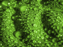 Green leaf with water drops. Royalty Free Stock Photos