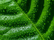 Green leaf with water drops. Stock Photography