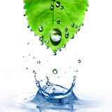 Green leaf with water drops and splash isolated on Royalty Free Stock Image