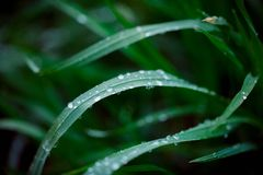 Green leaf with water drops. Toned photo Royalty Free Stock Image
