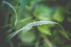 Green leaf with water drops. Toned photo Stock Images